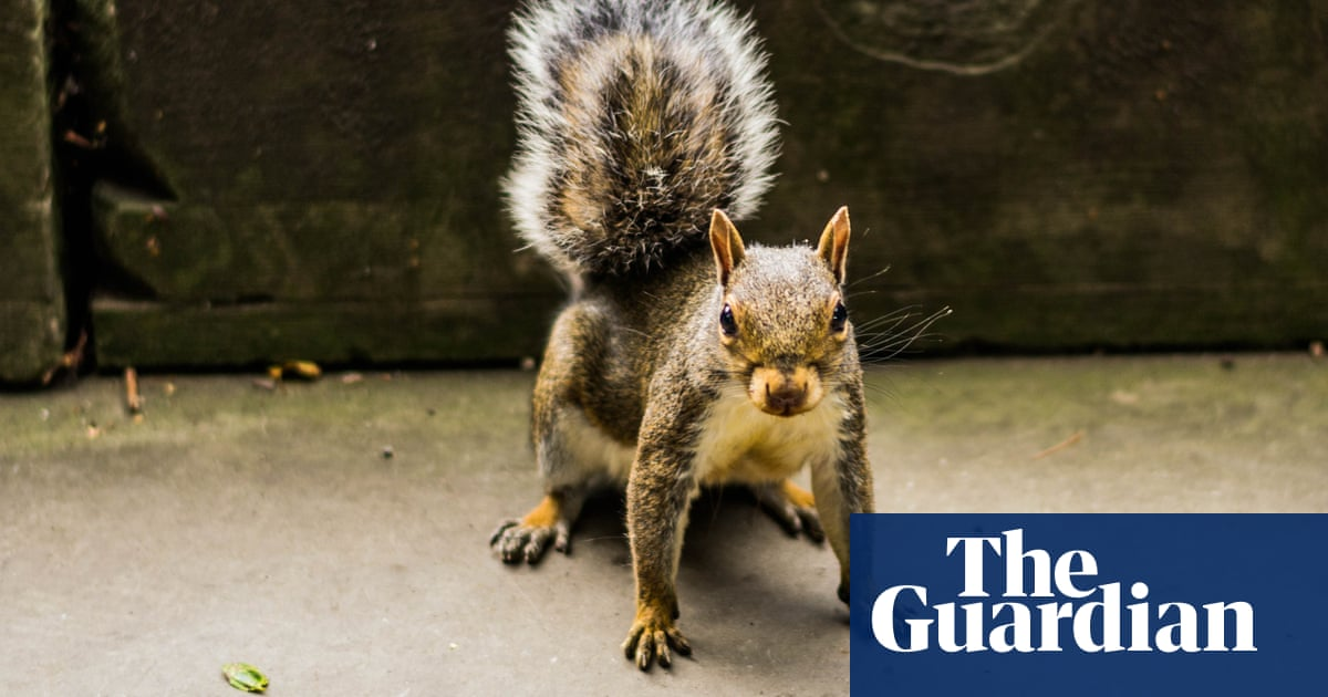 Tim Dowling: me and the squirrel, it's war
