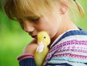 A young girl pets a chick at Baylham House Rare Breeds Farm, Ipswich