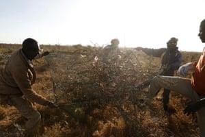 Men use a net to harvest desert locusts, near the town of Rumuruti, Kenya, February, 2021.