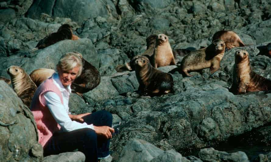 Valerie Taylor with a group of Australian sea lions.
