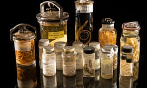 An assortment of specimens from the Smithsonian's parasite collection.