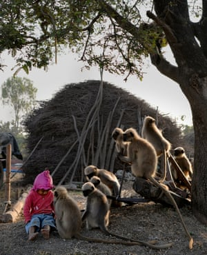 Samarth Bangari, aged 2, sits among langur monkeys in a field near his home in Allapur in India's southwest Karnataka state. He is still too young to talk, but the 2-year-old Indian boy has become a subject of local intrigue after befriending a gang of langur monkeys.