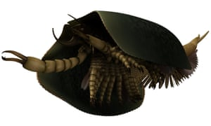 A reconstruction of Tokummia katalepsis showing a pair of large pincers (maxillipeds) at the front for capturing prey, with much of the multisegmented body protected by a broad carapace. The small mandibles and subdivided, spine-like bases of the legs were critical characters for resolving the evolutionary significance of Tokummia.