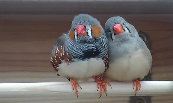 Birds in love produce more babies, study shows
