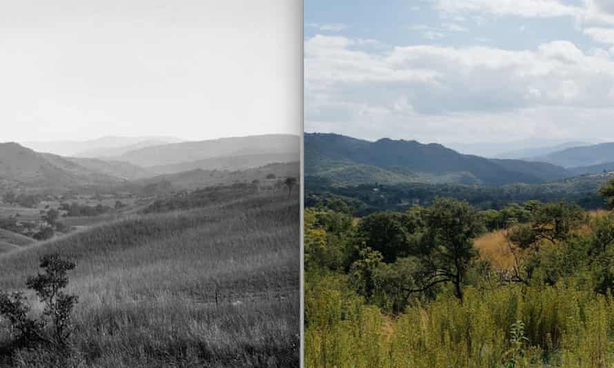 The increase in trees and shrubs in the savannas of South Africa is shown in two images taken more than 100 years apart near Nelspruit