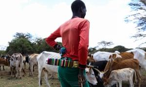 Herder watches his livestock
