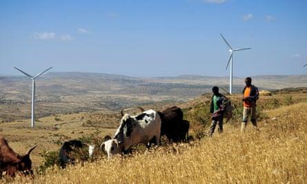 Men walk along a road with cattle near turbines at Ashegoda wind farm in Ethiopia's northern Tigray region, on November 28, 2013.