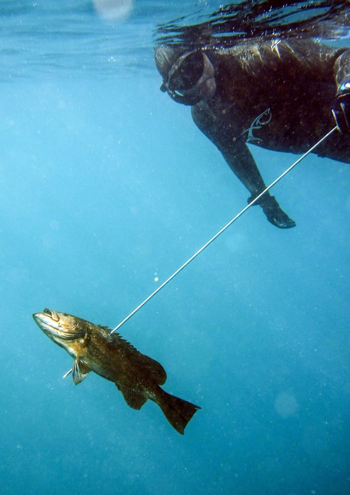 Are we wrong to assume fish can't feel pain? | News | The