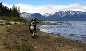 The Georgiadis's dog, Bernie, who hasn't had a seizure in four months.