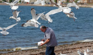 Seagulls mob a man carrying a fish and chip box in Largs, Scotland