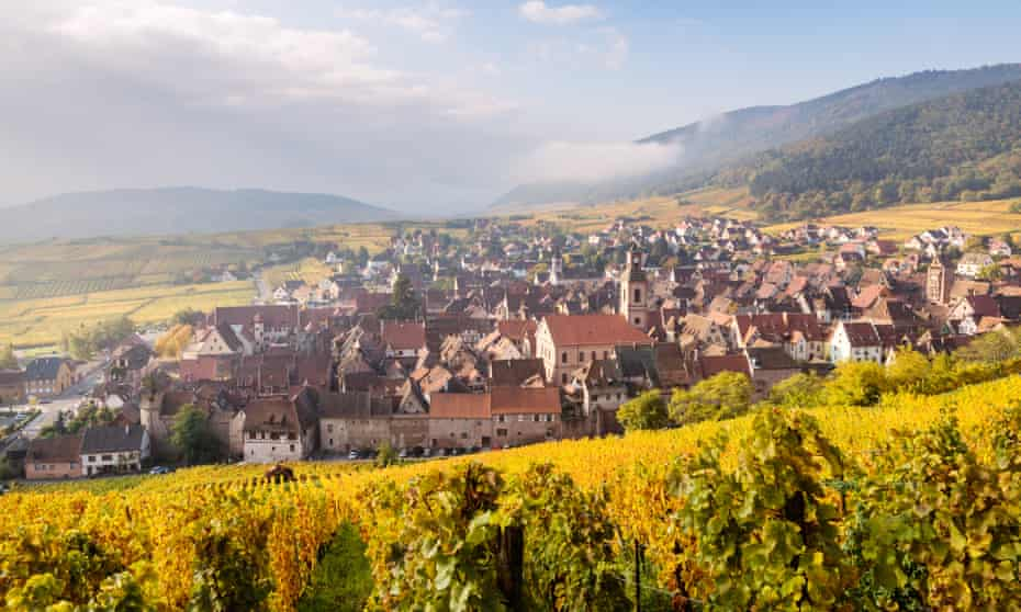 A vineyard in autumn, Alsace, France.