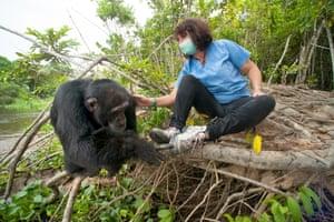 Ponso the chimp