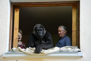 Director of the Espace Zoologique, Pierre Thivillon, and his wife Eliane with Digit, an 18-year-old female gorilla