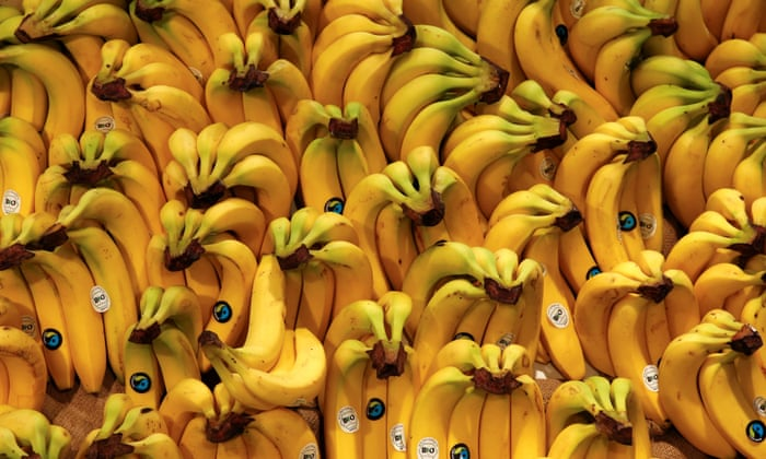 The five: genetically modified fruit | Science | The Guardian