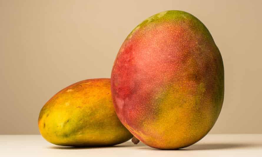 Studio shot of two whole mangos