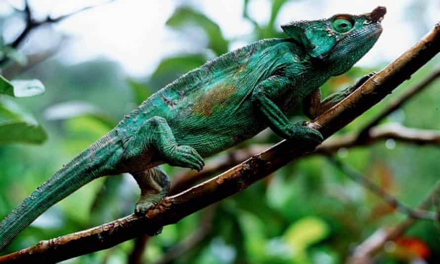 Crossword Blog A Cluedoku Q A With Chameleon Crosswords The Guardian