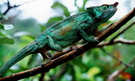 Crossword blog: a cluedoku Q&A with Chameleon