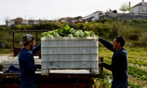Prisoners load cabbages on to a trailer in Leiria, Portugal