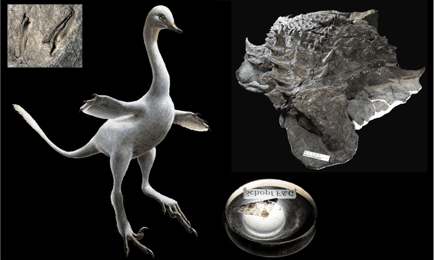 Some of the best fossils of 2017.