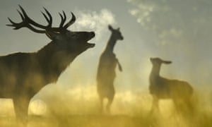 Stags and hinds were brought to Orkney and the Outer Hebrides by humans, but from where?
