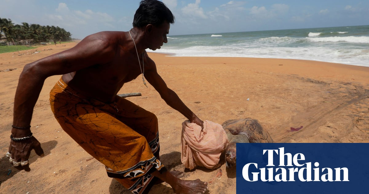 Hundreds of dead turtles wash ashore in Sri Lanka after cargo ship wreck