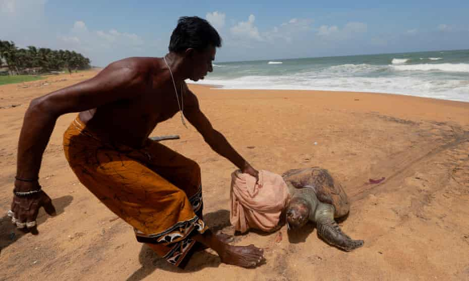 A man pulls a dead sea turtle that was washed ashore on a beach weeks after the MV X-Press Pearl container ship caught fire and sank off the coast of Colombo, in Mount Lavinia, Sri Lanka 24 June 2021.