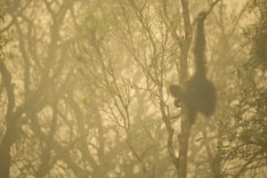 A Bornean orangutan is seen through the smoke of forest fires along the Mangkutup river, central Kalimantan province, Indonesia