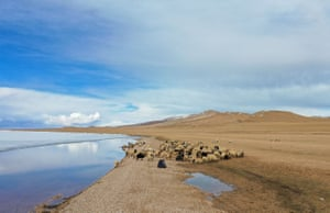 A flock of sheep roam along the Siling Lake in Naqu City in south-west China's Tibet Autonomous Region.