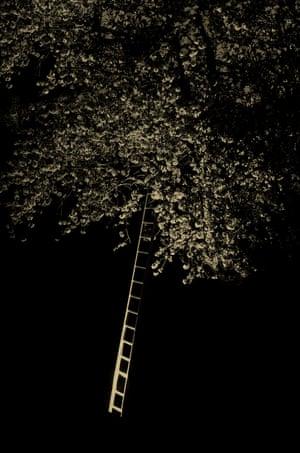 Tree-ladder, 2019