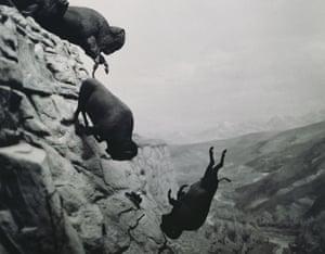 David Wojnarowicz's Untitled (Falling Buffalo) 1988-89