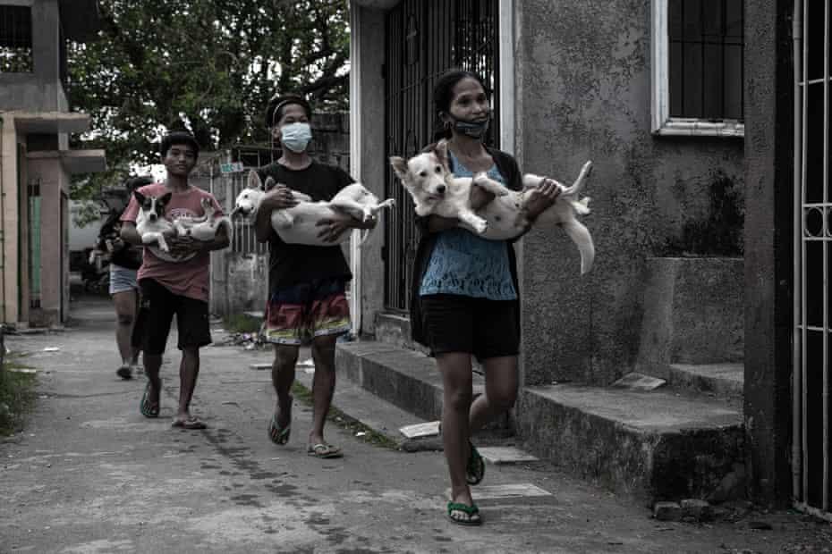 سگهایی که بعد از جراحی حمل می شوند