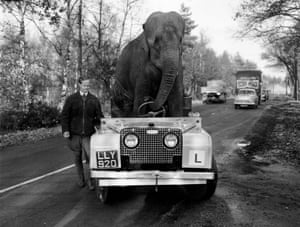Trunk Road: 'Kam', an elephant from Bertram Mills circus drives a Land Rover during training for the Christmas Show in 1959