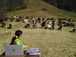 Fiammetta Melis, 10, studies with her laptop at the Samoclevo mountain pasture, Italy. She would normally attend the fourth primary school but since the school is closed due Covid-19 restrictions, and in order not to stay at home alone, she follows the lessons in DaD (didactics at a distance) at the mountain pasture with her father Massimiliano, who is a shepherd. A table like a school desk and two old stools are her classroom and goats are her playmates.