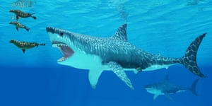 The Megalodon shark grew to three times the length of today's great white shark.