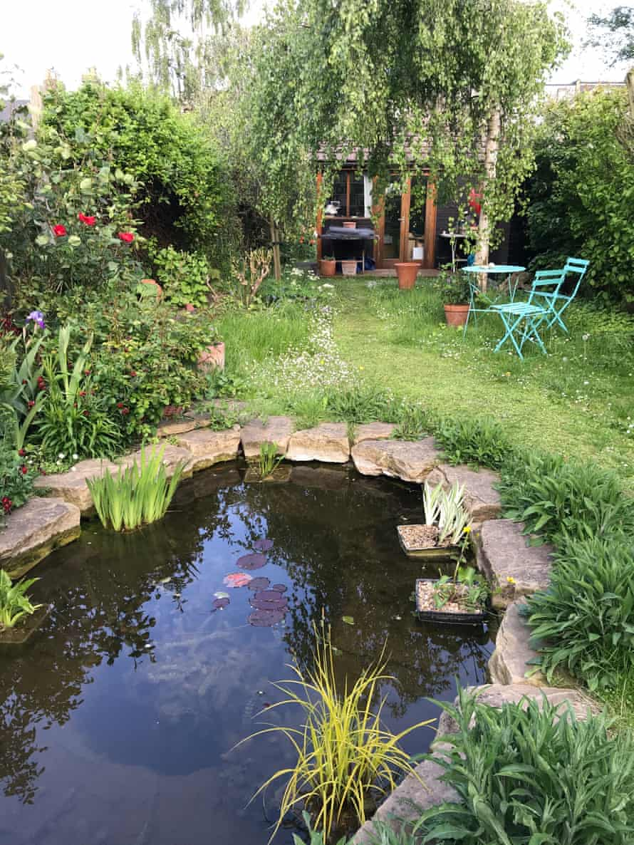 'In these times, the garden is what's keeping me sane': the pond in Olivia's back garden