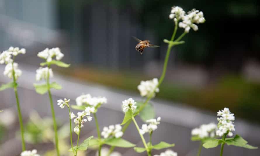 A bee in the vegetable garden