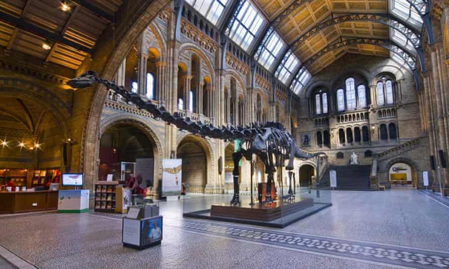 Dippy the dinosaur at the Natural History Museum in London