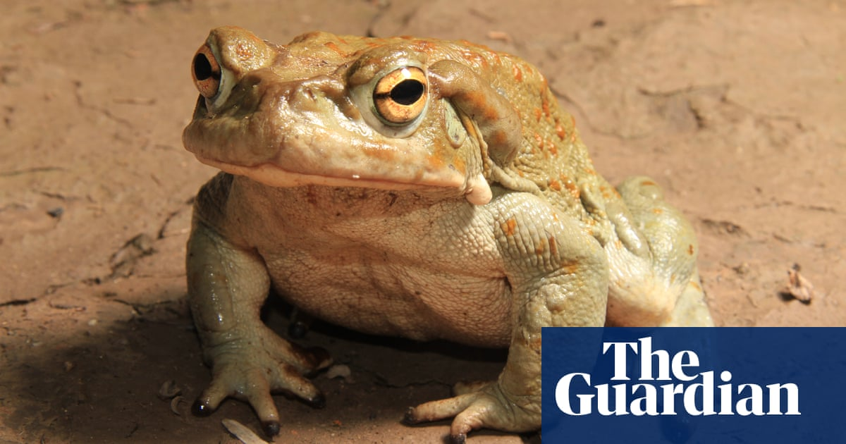 Predictable evolution: bad news for toads, good news for