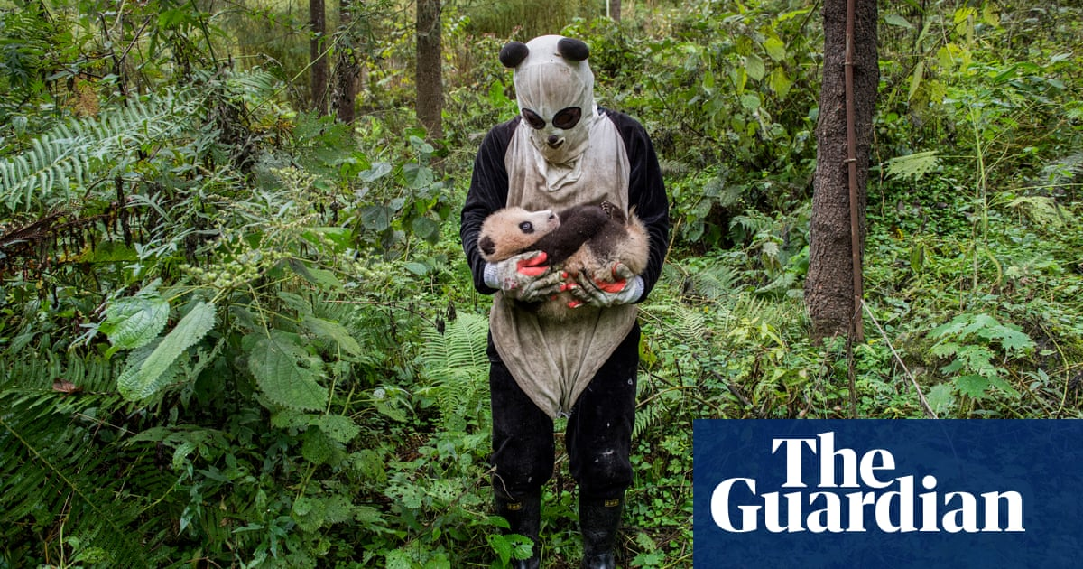 how to save forest and wildlife