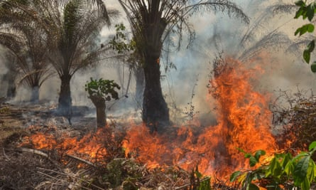 A fire at an oil palm plantation in Pekanbaru, Sumatra, due to intensive farming methods and the dry season.