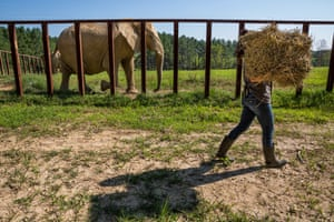 A keeper carries straw, at the Elephant Sanctuary, Hohenwald.