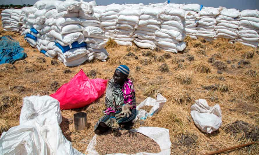 A woman collects grains left on the ground after a food distribution in Ganyiel, Unity State, South Sudan, on 4 March