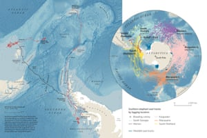 Tracking elephant seals across the Southern Ocean in Where the Animals Go.