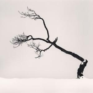 Kussharo Lake Tree, Study 6, Kotan, Hokkaido, Japan 2007, by Michael Kenna