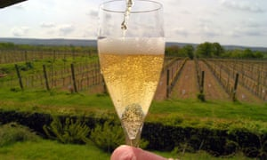 A flute of English sparkling wine next to a field of vines in East Sussex.