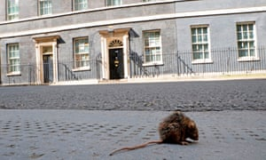 A rat on the pavement in Downing St