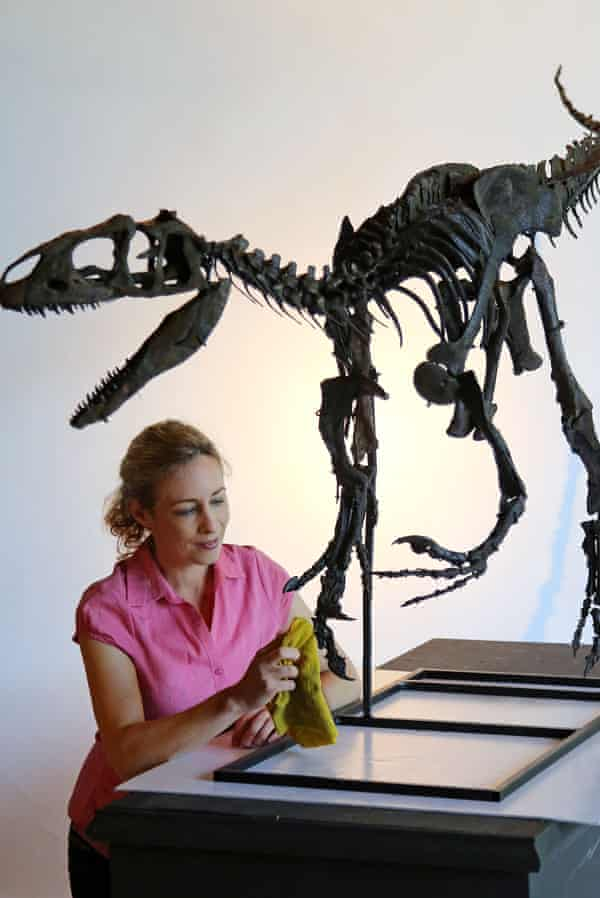 Lindsay Hoadley of Summers Place Auctions prepares the allosaurus skeleton.