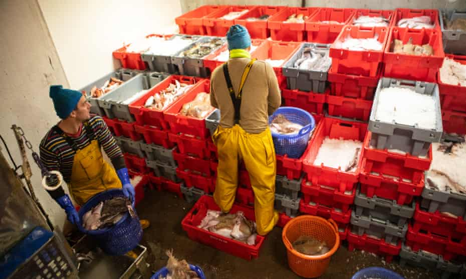 Fish are stored on ice in the hold.