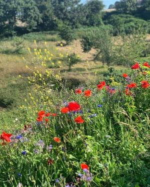 Flowers in Jersey
