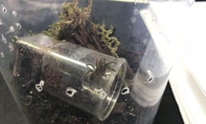 Two tarantulas may be on loose after babies found in